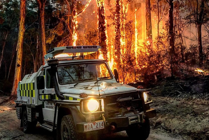 Trees are shown in flames behind a Forest Fire Management vehicle.