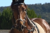 Another one of Natalie's horses
