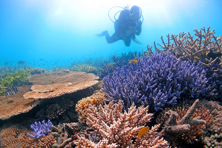 Line Bay surveys temperature-tolerant corals in the far northern Great Barrier Reef