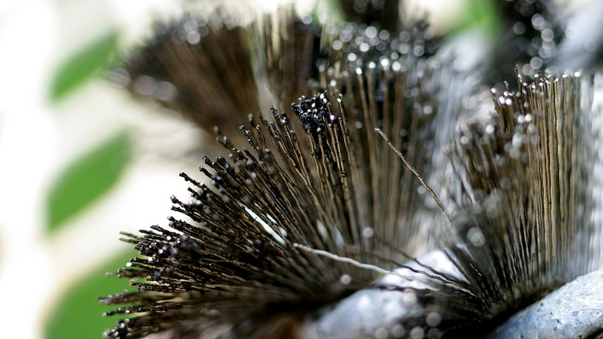 A close-up image of a dirty grill brush.