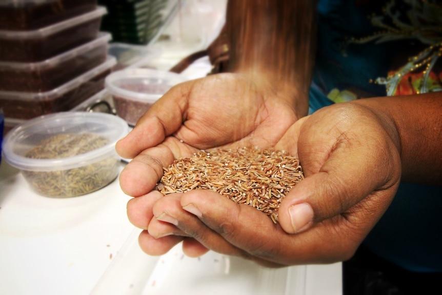 Australian native rice