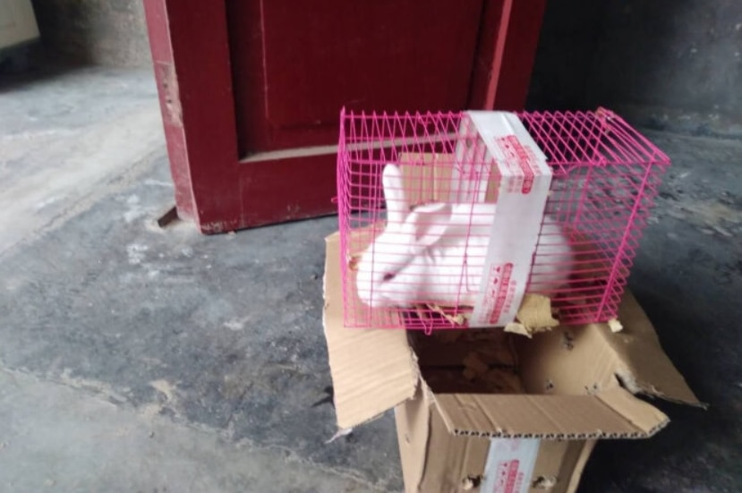 An image posted by a JD.com customer who bought a pet rabbit, delivered to his door in a cage and cardboard box.