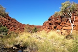 Arid Australian landscape with red rocks, a eucalyptus tree and creek.