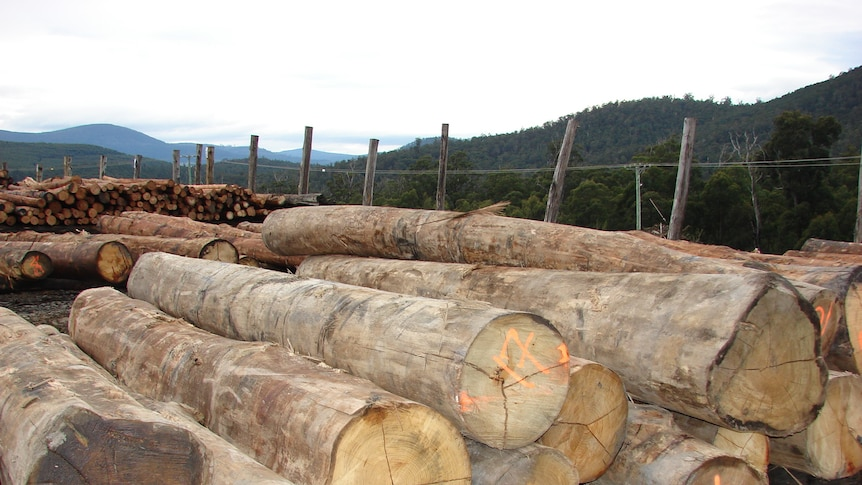 The payout is compensation for wood supply Ta Ann is giving up as part of the forest peace deal.