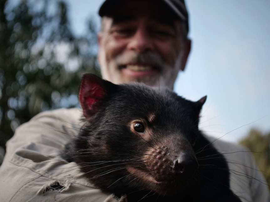 Bearded man wearing a cap smiling as he holds an adult Tasmanian devil to his chest, devil looking towards lens