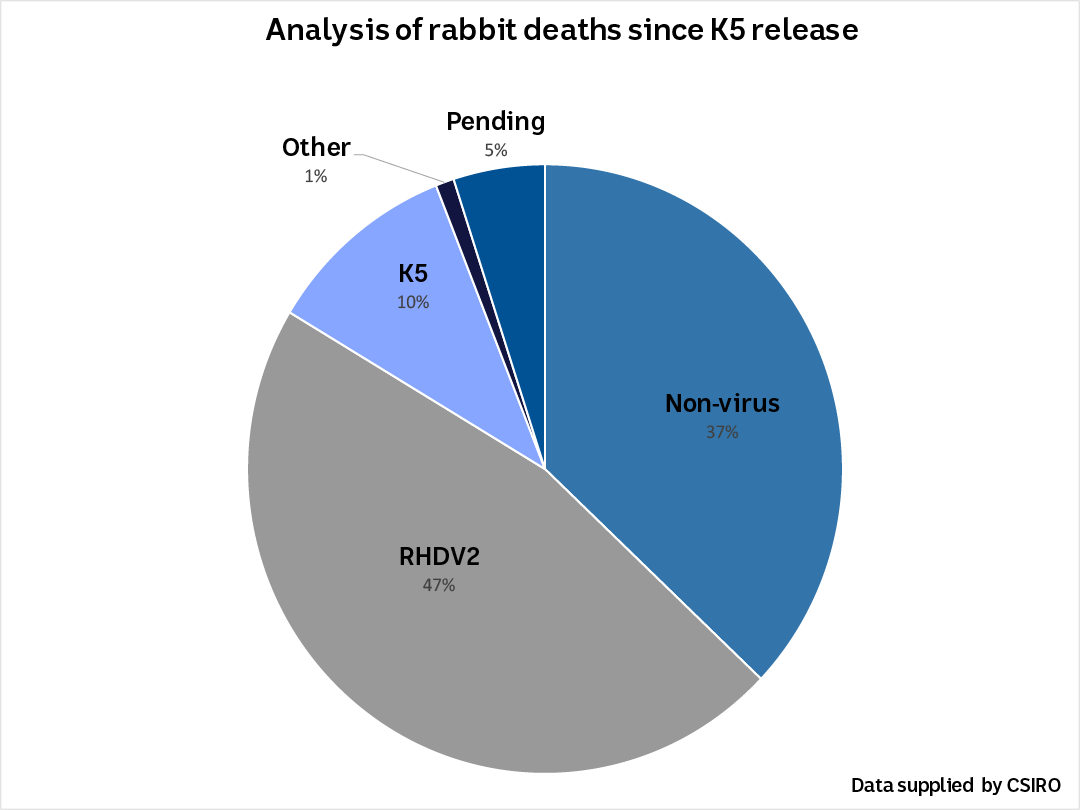 A pie chart showing the analysis of rabbit deaths since K5 release