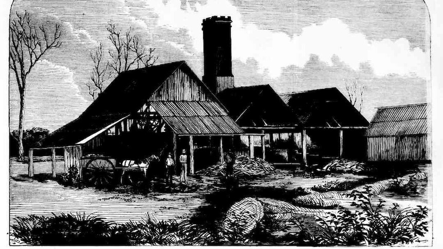 Black and white line drawing of a three barns with steel roofs and chimneys in Port Macquarie