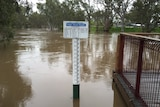 Flood waters in the Avoca River at Charlton drop