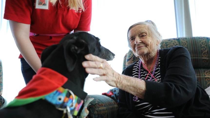 Tiffany the greyhound visits a woman at Jindalee Aged Care Residence.