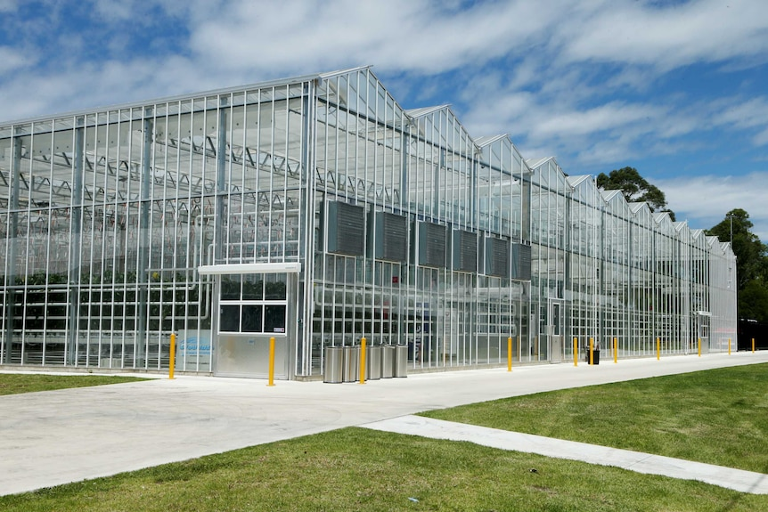 Modern Tall steel and glass structure housing plants, at Hawkesbury Campus of University Western Sydney