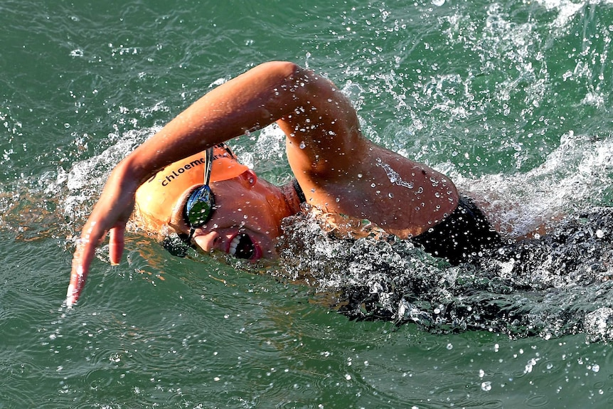 A long distance swimmer in the water as she raises her left arm while swimming freestyle.