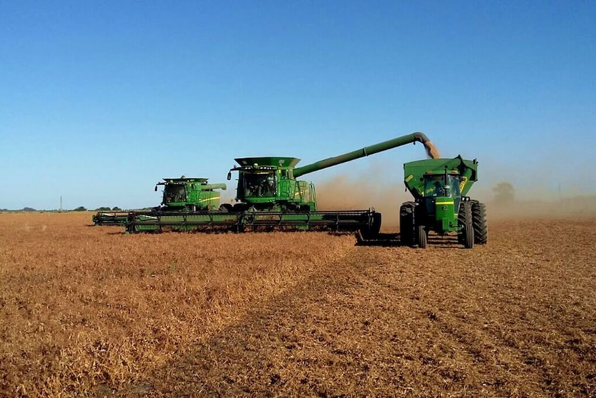 two headers reaping a brown crop with a chaser bin.
