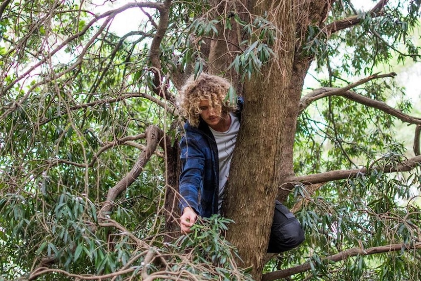 Jared Smith up a tree, picking native fruit.