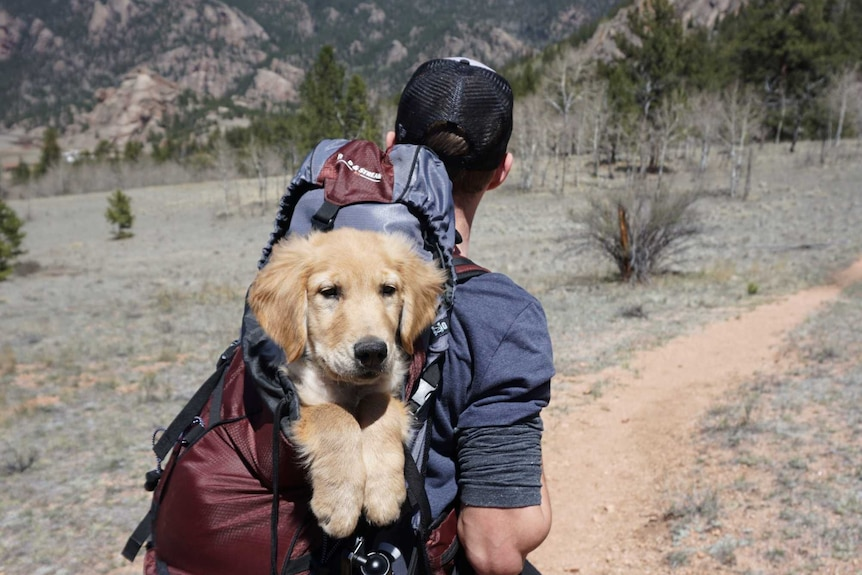 A golden retriever type dog sits in the backpack of a man surrounded by mountains