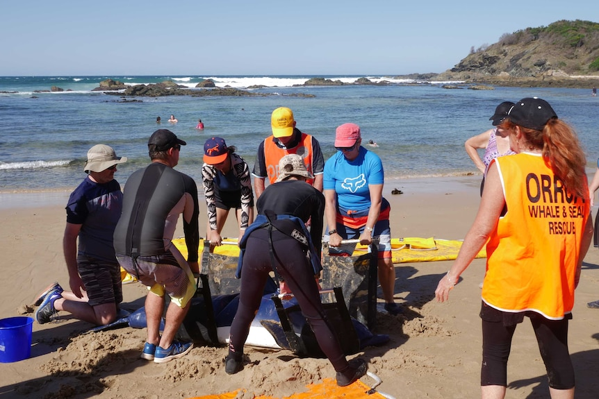 Volunteers on the beach gathered around an inflatable dolphin, practicing how to pick it up safely.