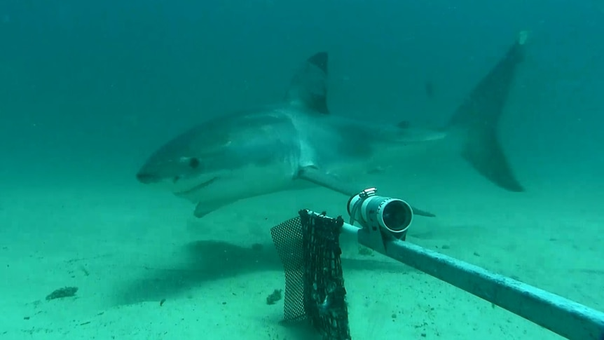 A shark swims past Clever Buoy