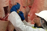 a person inspecting meat carcases