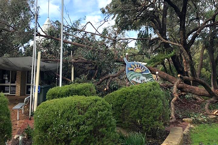 A tree lies on the roof of the Harvey Visitor Centre.