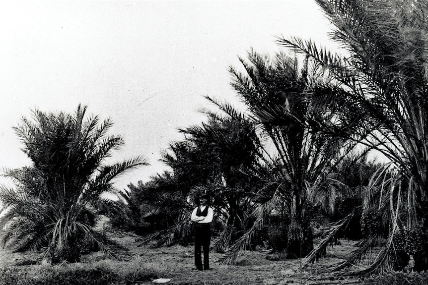 A black and white photo of a man standing with his arms crossed in front of a number of large date palms.