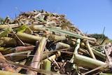 sugar cane in bin