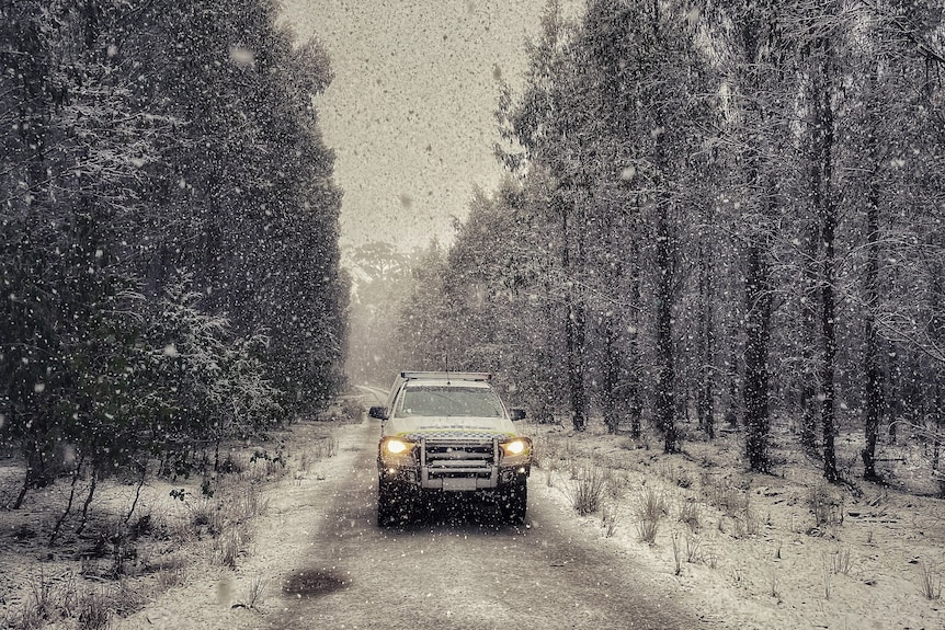 Tasmania Police 4WD on a snowy forest road.