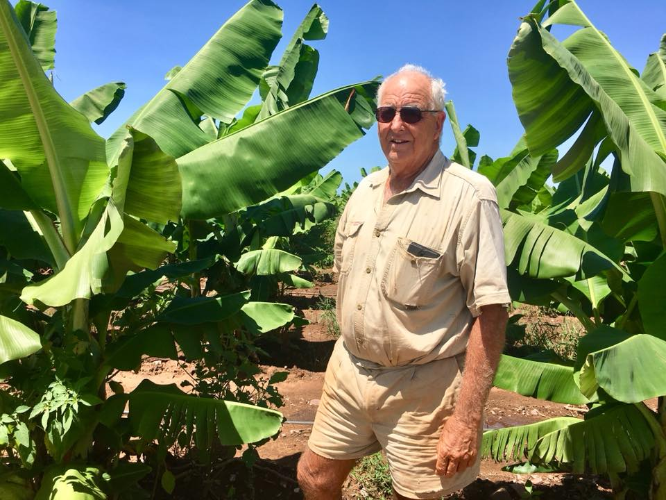 An older male farmer in front of banana crops