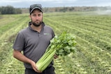 A man wearing a hat in a field of celery while holding celery