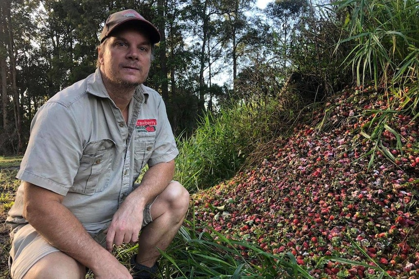 Strawberry Field's David Carmichael with some of the fruit that had to be dumped.