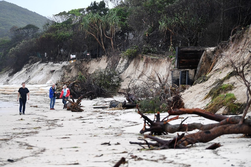 Locals inspect trees that are uprooted on the beach at Byron Bay.
