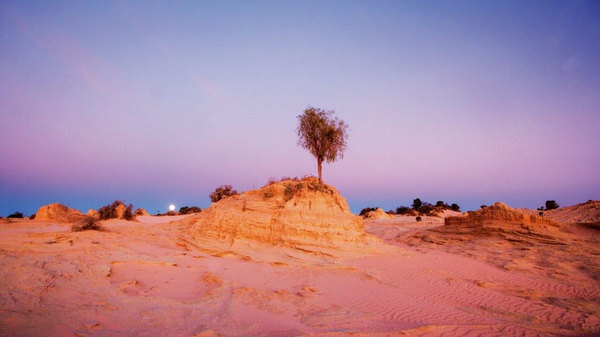 A desert sunset with a single tree.