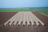 A line of harvesters clear parallel tracks across a soy plantation.