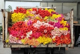 the back of a truck filled with bright red, yellow and pink flowers