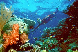 A tourist swims on the Great Barrier Reef.