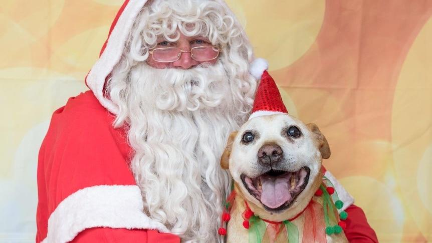 Misha visiting Santa at Christmas in the Bega Valley
