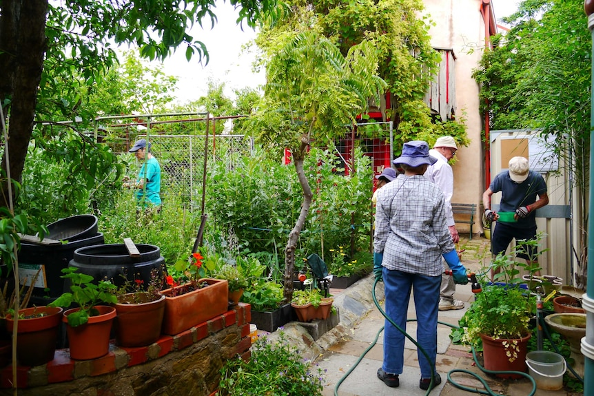 People tend to plants in a lush garden.