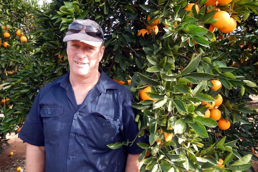Mark Doecke amongst his orange trees.