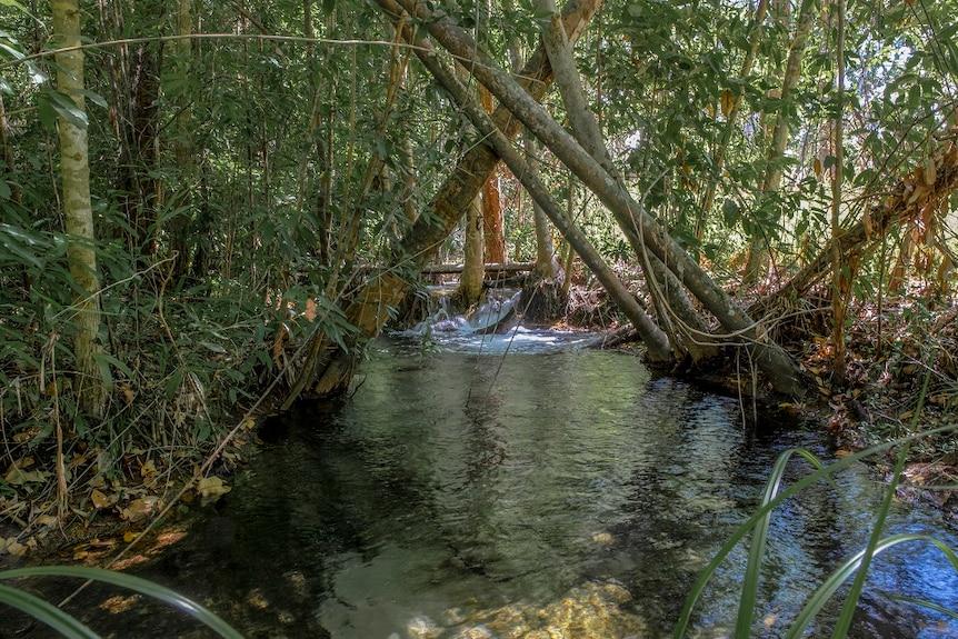 A pristine waterhole in Litchfield.