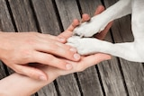 Human hands reaching out to dog paws.