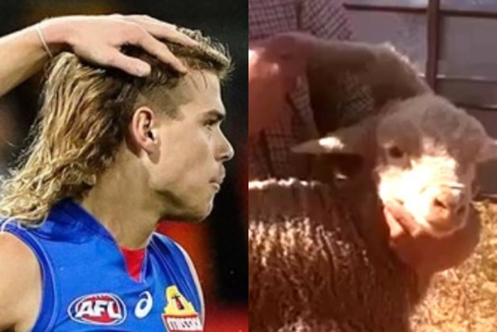 Composite image of a side profile of AFL player Bailey Smith and a sheep with a leg growing from its head.