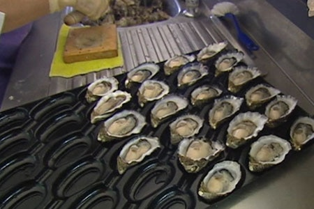Oyster growers say the jury is still out on the impact of climate change on their industry.