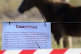 Nineteen horses infected with hendra have died or been put down since June 20.