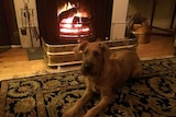A dog enjoys the warmth in front of the fire place.