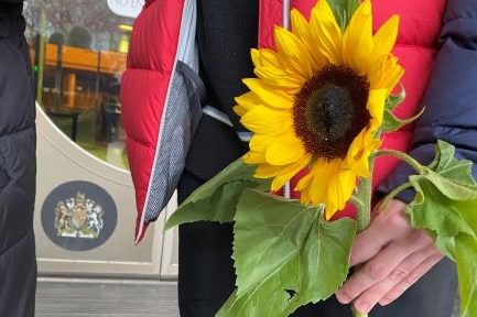 Sunflowers outside court