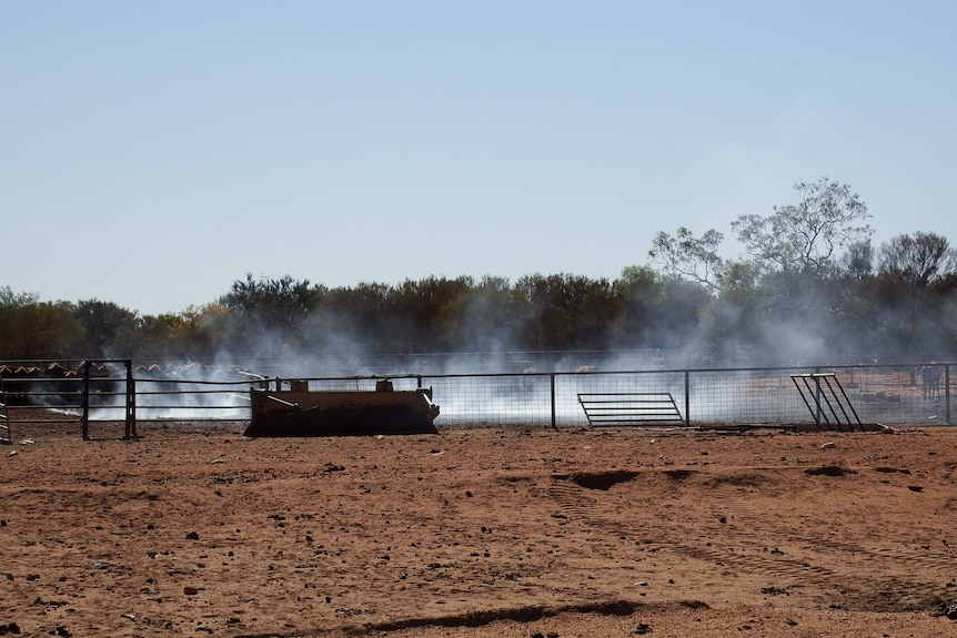Smoke billowing from the ground in a set of cattle yards.