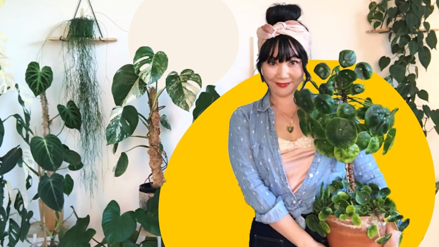 A woman holds a large Chinese money plant in a room full of plants, outlined by a bright yellow circle.