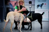 A white/yellow dog and a black dog stand next to each other as the latter nuzzles a blonde woman crouched above them.