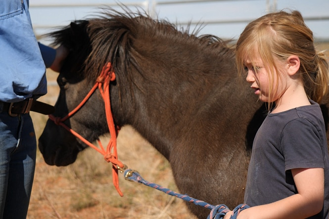 A young, blonde child stands next to a small, dark brown pony, holding its reins.