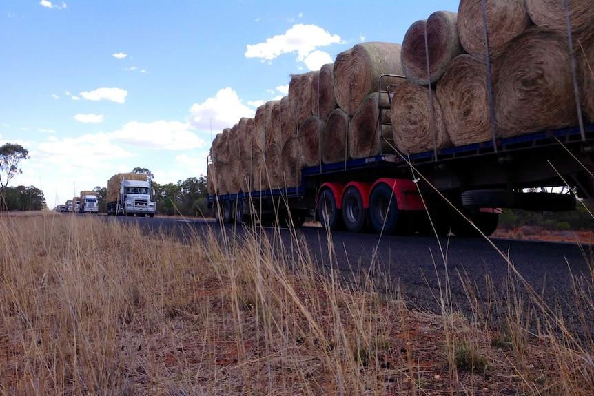Hay convoy in NSW