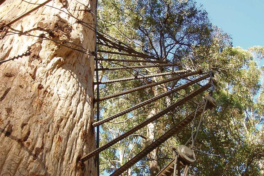 The Diamond Tree ladder is made of 130 steel pegs.