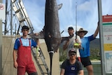 Dead swordfish hanging with four fisherman standing around it.